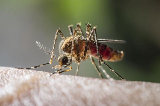 Larwy komarów żyją i rozwijają się w wodzie, bo tam samica składa zapłodnione jaja. Ostatnie powodzie mogły te owady wymyć i spowodować większe niż zwykle rozjuszenie.