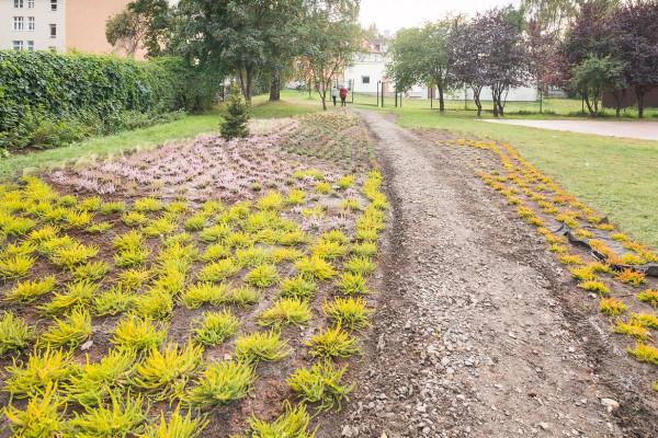Nowe nasadzenia roślin w Parku Nad Strzyżą we Wrzeszczu.