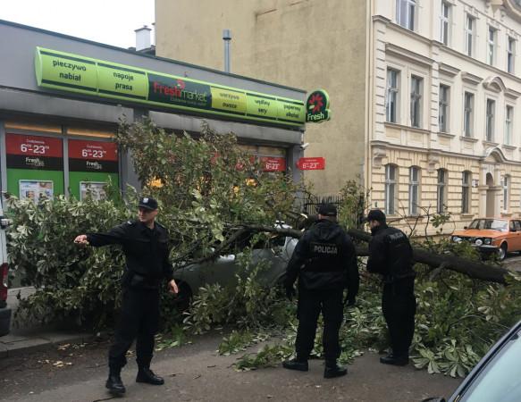 Powalone drzewo na ul. Waryńskiego w Gdańsku.