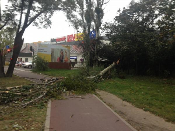 Powalone drzewo na ścieżce rowerowej.