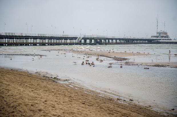 """Przy molo powstaje duża piaszczysta łacha - zdaniem naukowców, po wybudowaniu mariny, woda zaczęła w tym miejscu """"odkładać"""" rumowisko pochodzące z pobliskiego klifu w Orłowie."""