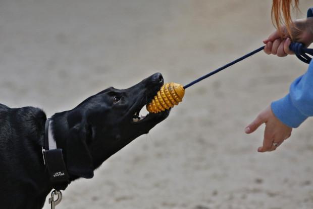 W zawodach Rally-O mogą brać udział zarówno psy rasowe, jak i nierasowe. Z kolei przewodnikiem może być praktycznie każdy - dorośli, młodzież, dzieci, osoby niepełnosprawne.