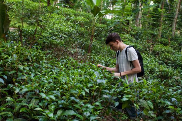 """""""W pewnym momencie mojego herbacianego rozwoju poczułem, że chciałbym pójść o krok dalej. Poznać miejsca i ludzi, którzy pracują na plantacjach, uprawiają tę roślinę, mają z nią kontakt każdego dnia. (...) Zebrałem odpowiednią kwotę, wziąłem urlop od szkoły i pracy i poleciałem w samotną podróż, 7500 kilometrów od domu."""""""