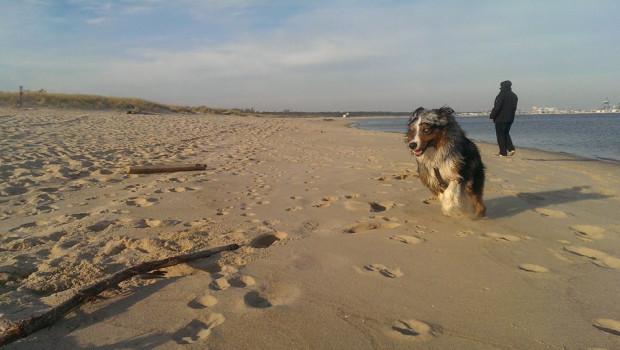 Obecnie w Gdyni i w Sopocie z psem nie można wchodzić na plażę od 1 maja do końca września. Wyjątek stanowią specjalnie wydzielone plaże dla psów. W Gdańsku zakaz obowiązuje tylko na terenie kąpielisk.