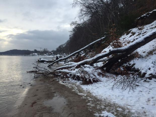 Drzewa, które spadły z klifu nie zostaną usunięte.