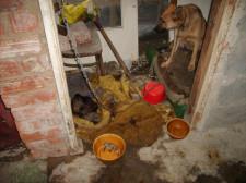 Suka znajdująca się na łańcuchu w przybudówce została także odebrana w asyście policji i również znalazła nowy dom.
