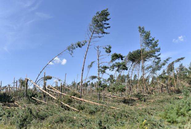 W Pomorskiem wichura zabiła pięć osób, zniszczyła tysiące hektarów lasu i uszkodziła setki domów.