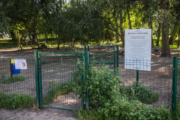 Wybieg dla psów na sopockich Błoniach (ul. Polna) wyposażony jest m.in. w różne przeszkody, opony, pnie i ławki do siedzenia.