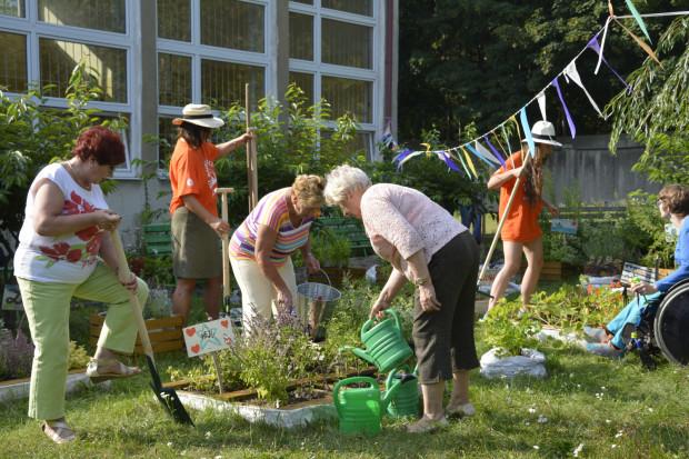 Ogród społeczny w Gdyni: każdy może tu przyjść, zasadzić roślinę, a potem o nią dbać.