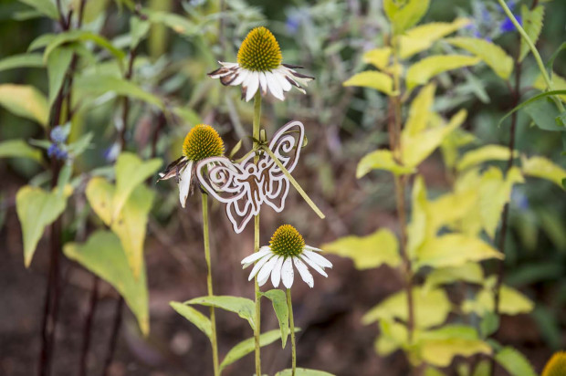Gdańsk otworzył 21 stref dla motyli. Kolorowe rabaty mają wabić lubiane owady.