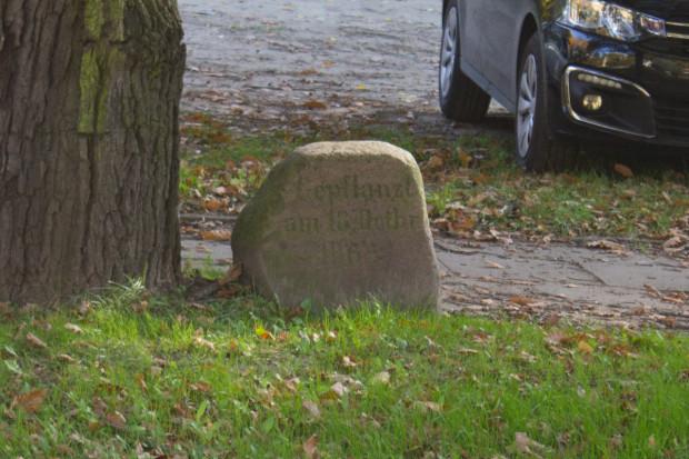 Kamień upamiętniający nasadzenie dębu. Do dziś widać na nim napis: 'Gepflanzt am 18 Octbr. 1863' czyli 'Zasadzone 18 października 1863'.