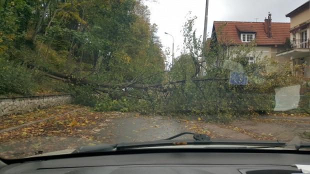 Powalone drzewa usuwali z ulic strażacy.