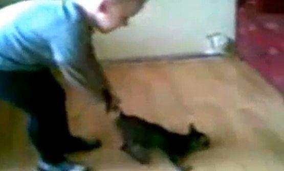 Kilkuletni chłopiec w nieprawdopodobnie okrutny sposób maltretuje kota. Zachęca go do tego osoba filmująca scenę. To ona stanie przed sądem i odpowie za znęcanie się nad zwierzęciem.