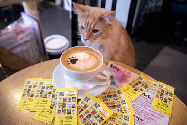 Kocie kawiarnie to nowość w Trójmieście. Lokale powstały w Gdyni i w Gdańsku. Na miejscu można poznać i adoptować kota.