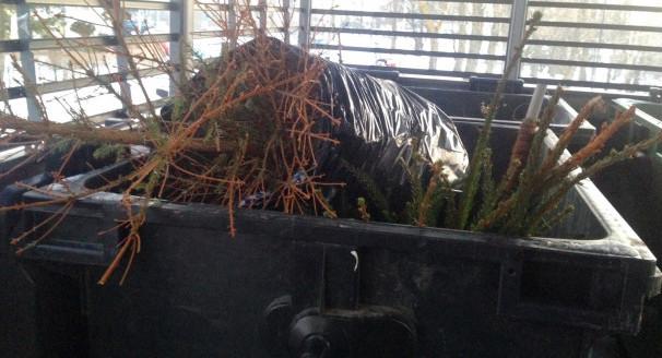 Wrzucanie drzewek po świętach do pojemników to zły pomysł. Lepiej zostawić je przy altanie, sprawdzając wcześniej terminy odbioru choinek.