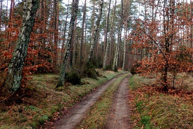 Szlak w większości wiedzie przez lasy