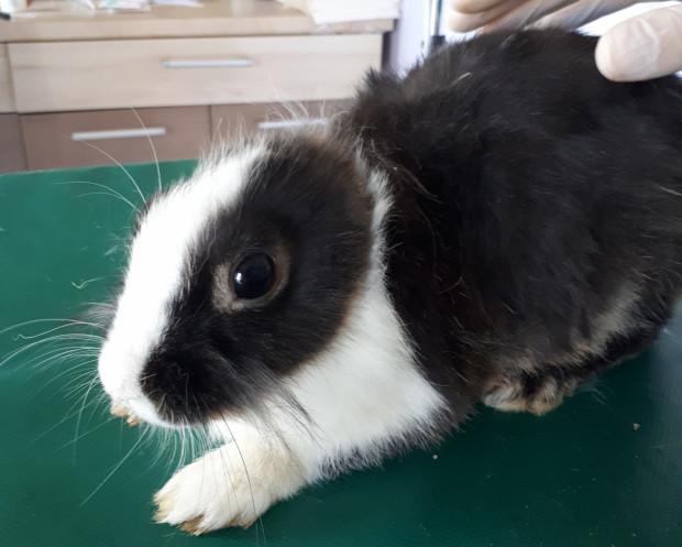 Większość królików przejętych przez sopockie Uszakowo miała liczne obrażenia.