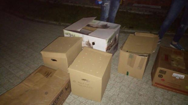 Króliki transportowane były z Berlina bez pożywienia i wody.