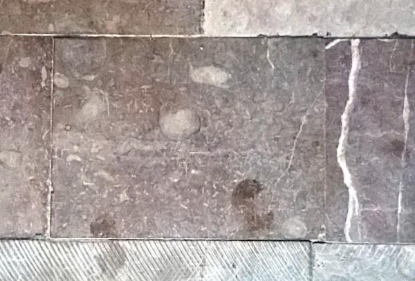 Kościół Bożego Ciała. Owalne oraz przypominające gałązki kształty to skamieniałości gąbek.