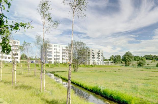 Przez znaczną część roku miejsce, gdzie w czasie opadów zbiera się woda wygląda jak zielona łąka.