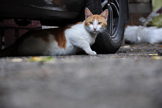 Choć kot na zewnątrz nudzić się nie będzie, to jednak czyha tam na niego wiele niebezpieczeństw...