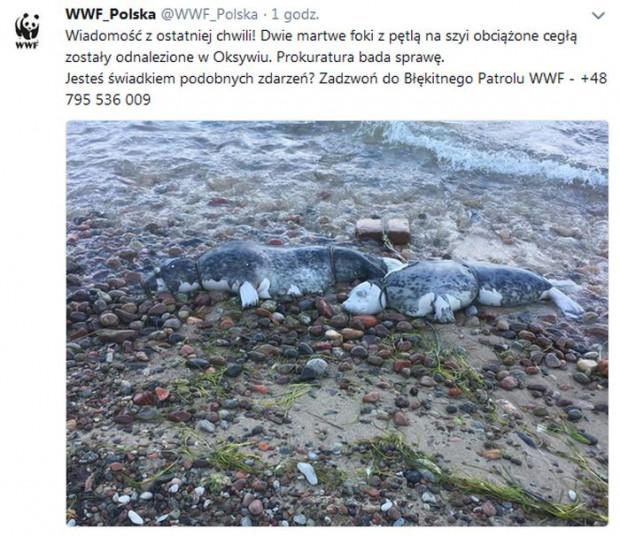 Martwe foki wyrzucone na brzeg.