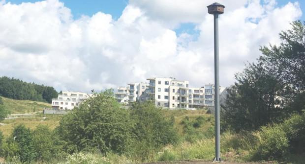 Niewielką wieżę dla jerzyków ustawiono w zeszłym roku na Karwinach.