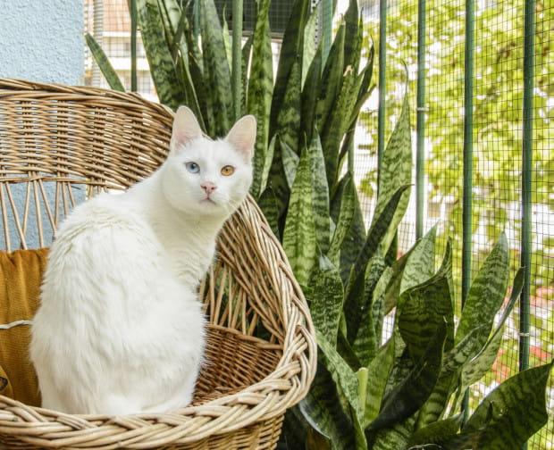 Koty uwielbiają przesiadywać godzinami na balkonie. Czy wiesz, co zrobić, aby zapewnić mu bezpieczeństwo?