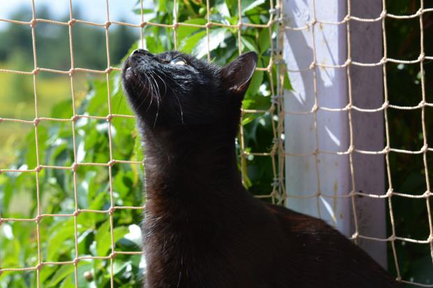 Pamiętaj, aby oczka siatki były mniejsze niż głowa kota. Jeżeli futrzak przeciśnie głowę, to resztę ciała również.