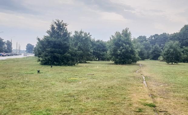 Rezerwa Drogi Zielonej na wysokości Parku Nadmorskiego. Po lewej ul. Dąbrowszczaków/Kaczyńskiego.