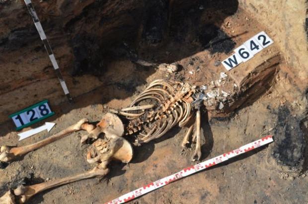 Szkielet człowieka, który zginął blisko 700 lat temu, znaleziony podczas prac archeologów (m.in. z UG) pod Barczewkiem na Warmii.