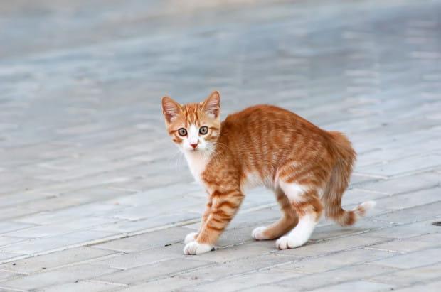 Koty, które spadły z balkonu albo czmychnęły na zewnątrz poprzez uchylone drzwi mieszkania raczej nie odchodzą daleko.