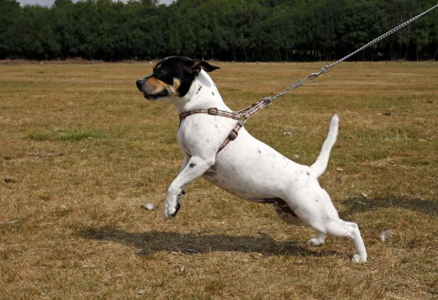 Spacer z psem powinien być spokojny, a smycz luźna.