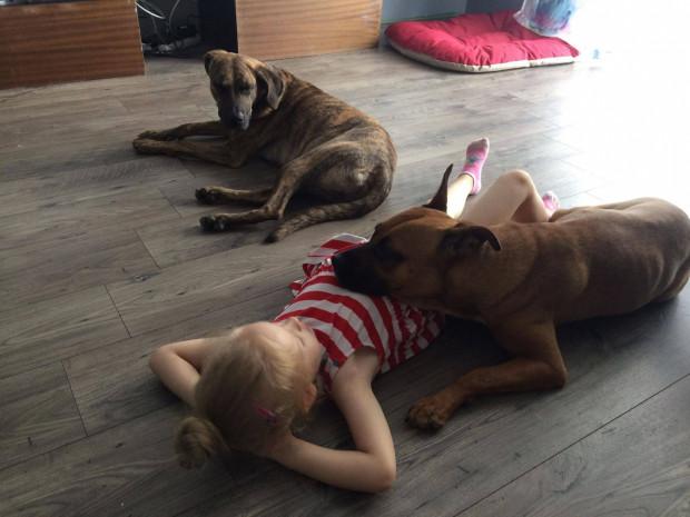 Psy bullowate są bardzo rodzinne i oddane człowiekowi.