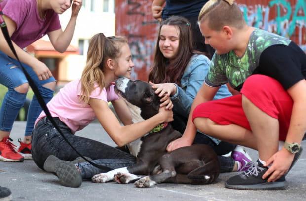 Adopcja psa wymaga poświęcenia dużo czasu, pracy oraz miłości.