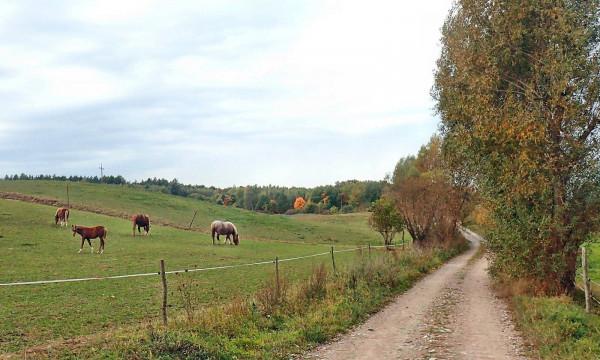 Rowerowy Szlak Kłodawski często zagłębia się w terenie i wiedzie drogami gruntowymi. Miejscami zdarza się także grząski piach, a nawet bruk.
