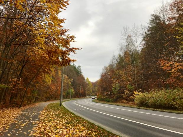Jadąc 150 z Witomina można podziwiać kolory jesieni na ul. Kieleckiej.