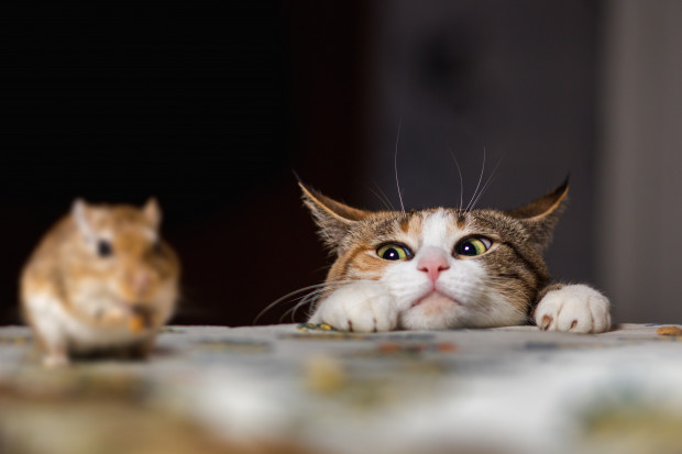 Kot poluje dla zabawy, niestety jest to często rozrywka okupiona życiem innych zwierząt.