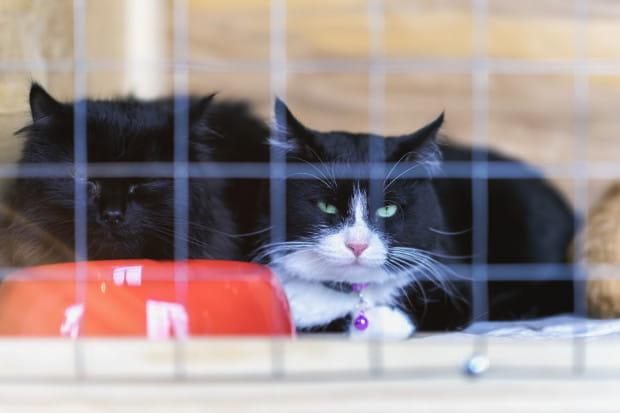 Nie zapominajmy też o kotach ze schroniska - one też czekają na karmę, zabawki i koce.