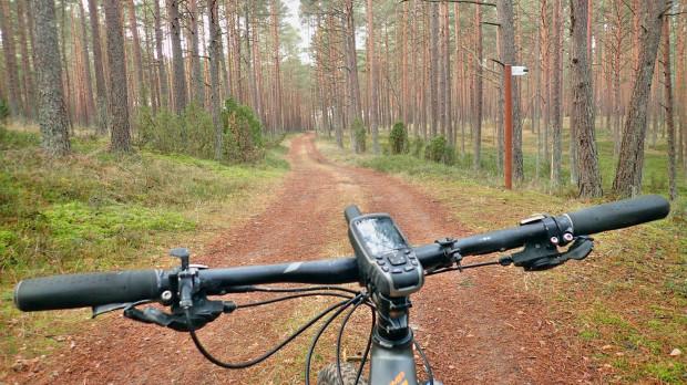 W grudniu, gdy wokoło jest już szaro, buro i ponuro, warto wybrać się w wiecznie zielone Bory Tucholskie