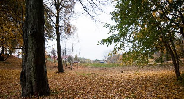 Park w Chwarznie