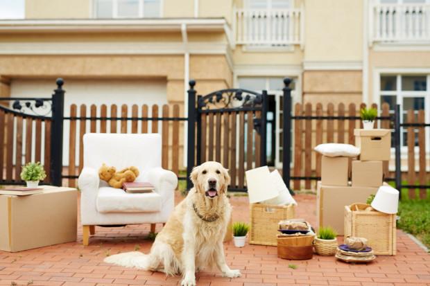 Wiele osób posiada psa lub kota, więc warto wyjść naprzeciw potrzebom rynku.
