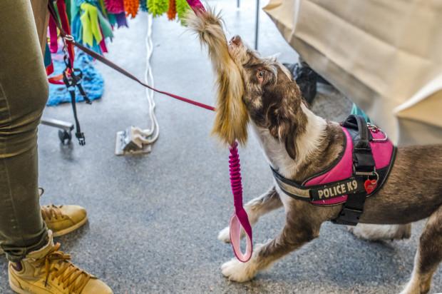 Psy chętnie testowały sprzedawane na targach akcesoria.