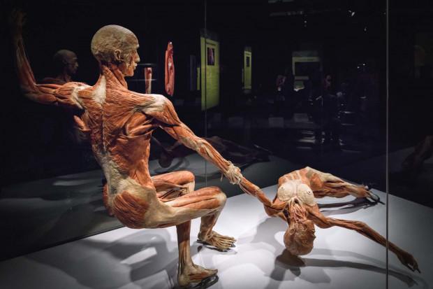 Wystawa Body Worlds to ponad 160 eksponatów prezentujących zmiany zachodzące w ludzkim ciele.