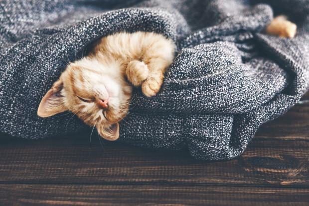 Koty to przewrotne zwierzęta, które często zaskakują swoim zachowaniem.
