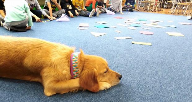 Zajęcia edukacyjne z udziałem psa pomagają dzieciom zrozumieć świat zwierząt.