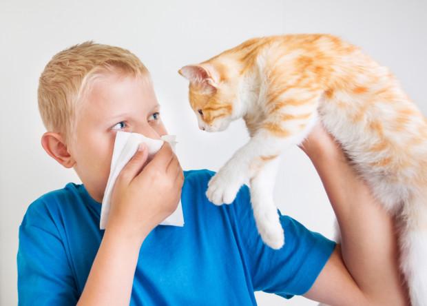 Alergeny zwierzęce są zawarte nie tylko w sierści, ale również w ślinie zwierząt, moczu i naskórku.