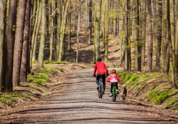 Lasy Nadleśnictwa Gdańsk