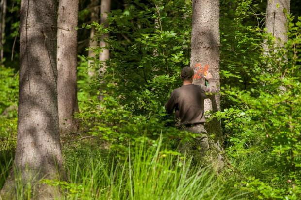 Wycinka drzew jest prowadzona planowo, a w miejsce wyciętych drzew zawsze pojawiają się nowe - przekonuje Łukasz Plonus.