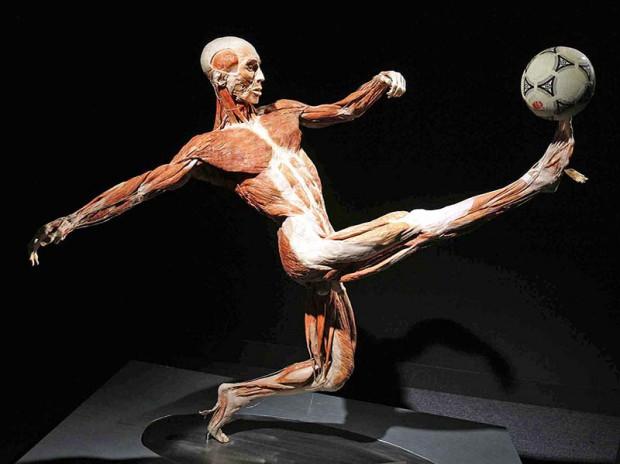 """Eksponaty wystawy """"Body Worlds"""", która jest prezentowana do 26 czerwca w Galerii Metropolia we Wrzeszczu."""